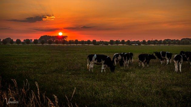 Een Hollandse zonsondergang
