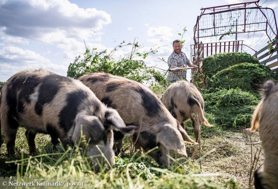 De biologische boerderij van Josef bevat een heel scala aan specialiteiten. © Netzwerk Kulinarik/ pov.at