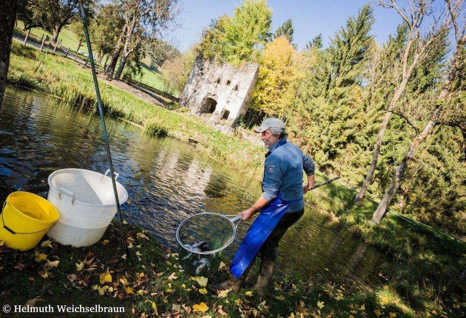 Het landgoed Gut Schloss Lichtengraben kweekt grote en gezonde forellen. © Helmuth Weichselbraun