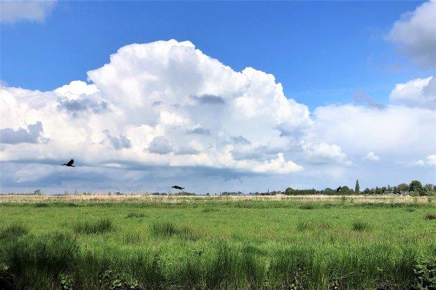 Natuurgebieden in het Groene Hart.