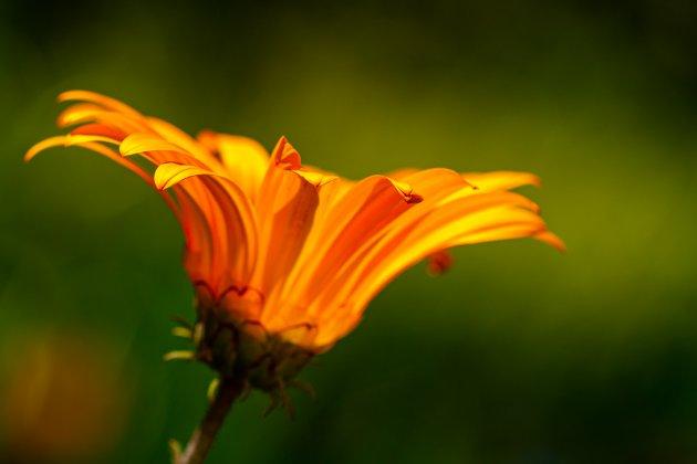Oranje boven.