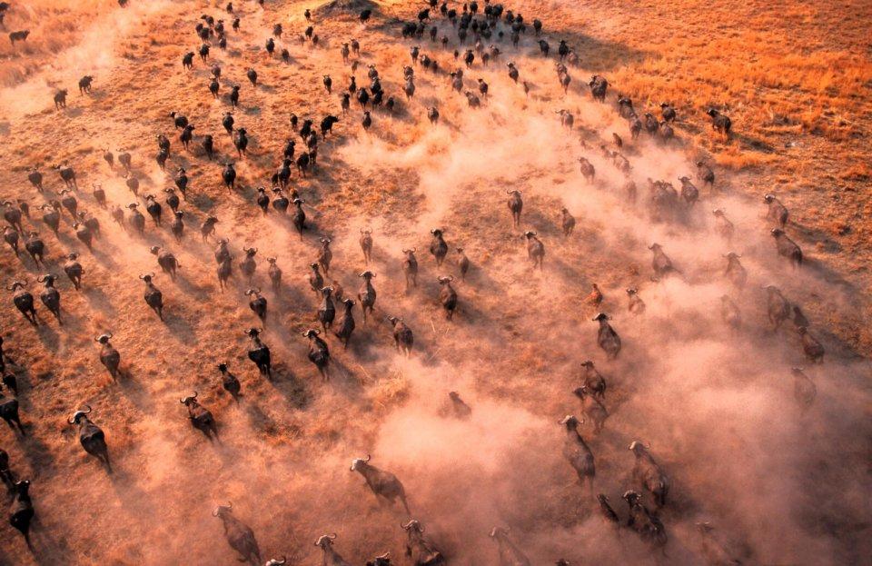 De Grote Trek van Soedan CREDIT Martin Harvey