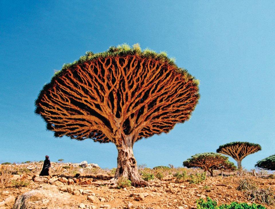 Socotra, een eilandengroep ten zuiden van Jemen. CREDIT Dani Jeske, Lineairfoto.nl