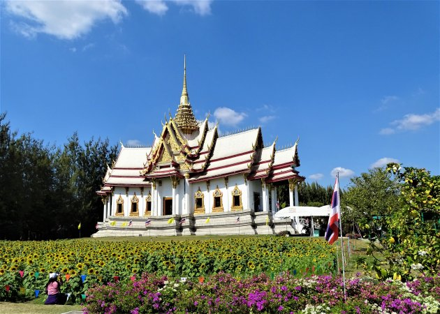 Zonnebloemen voor de Tempel.