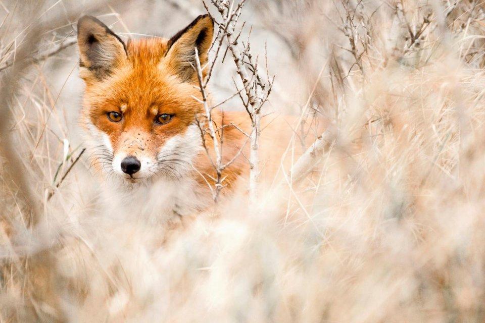 Opgaan in de omgeving. Credit Loulou Beavers.