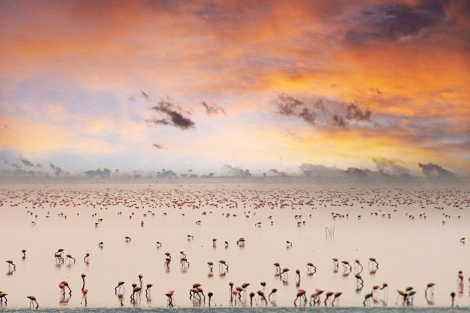 Flamingo's in Tanzania. Foto: iStock