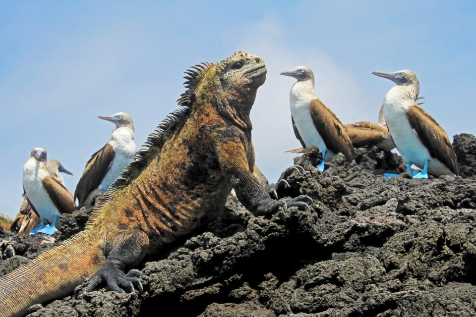 De natuurschatten van de Galapagoseilanden. Foto: iStock