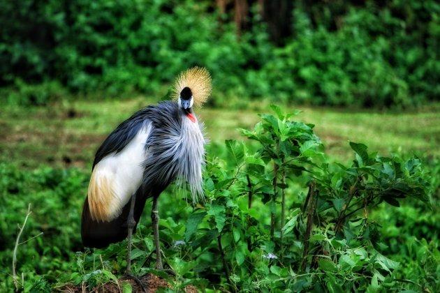 De nationale bird
