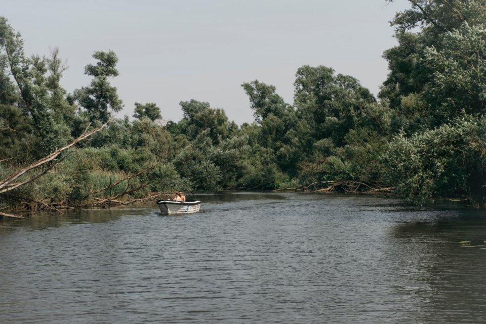 De wilgen in de Biesbosch