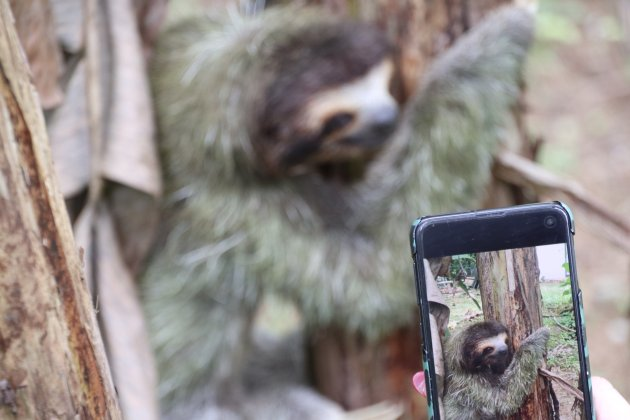 Living like a sloth during Corona