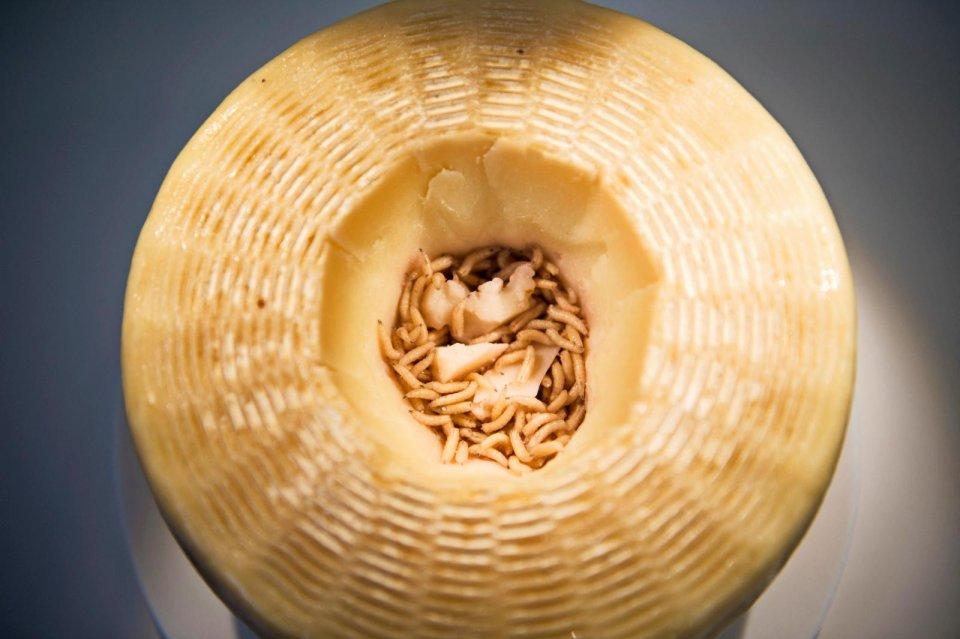 Kaas met maden eten in Sardinie - Italie CREDIT ANP