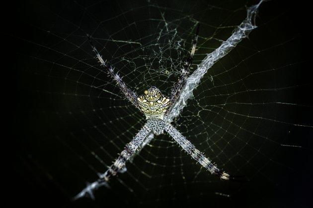 Spinnen in Indonesië