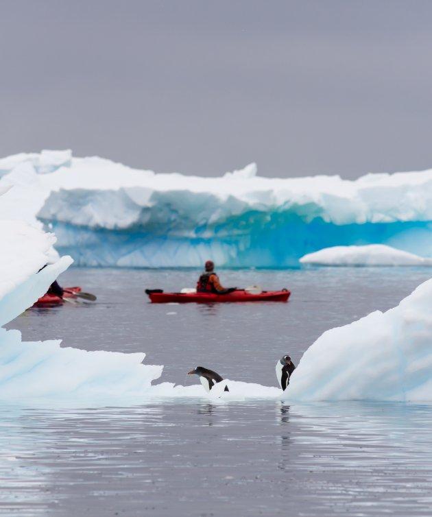 Kayakken met de pinguins