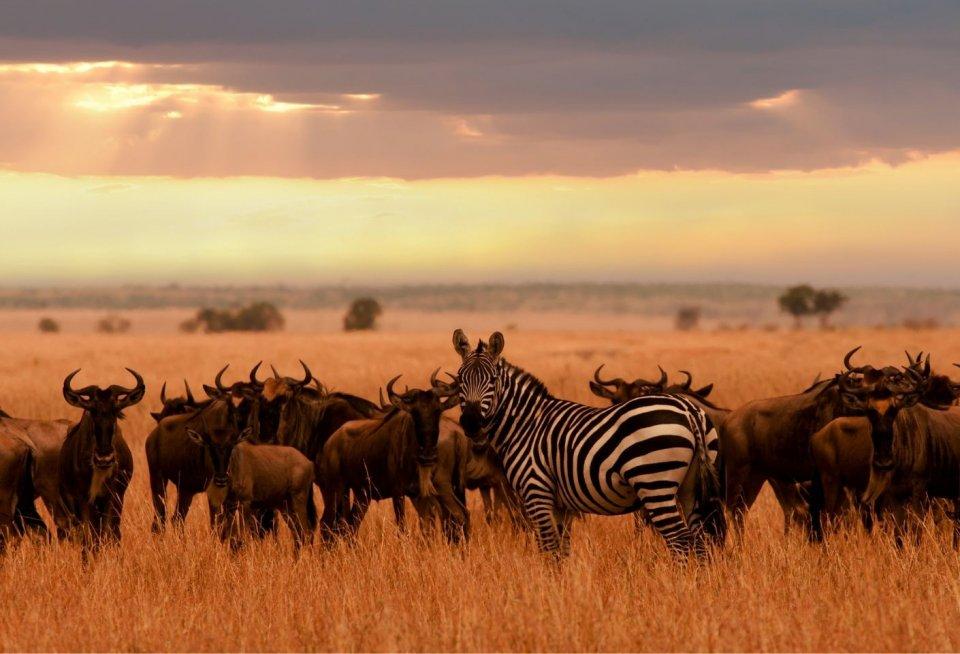 Serengeti en Ngorogorokrater