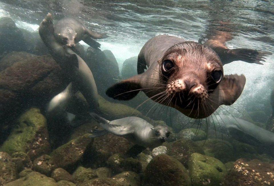 Galapagoseilanden. Foto: Getty Images