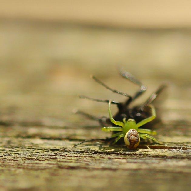 Spider attack!