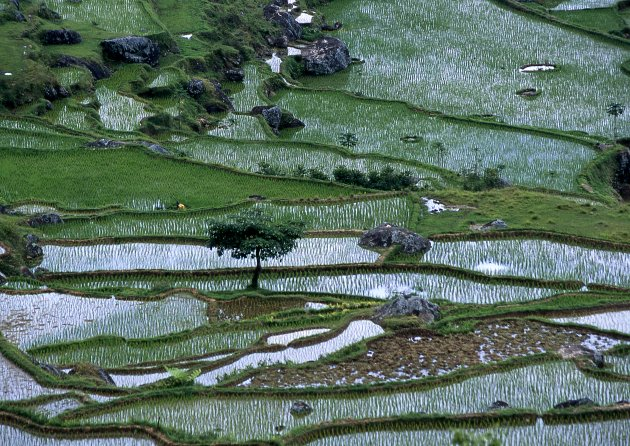 Rijsvelden in Tana Toraja regio Sulawesi Indonesië