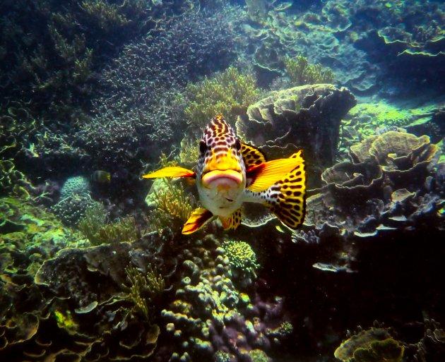 Kleurrijke onderwater wereld