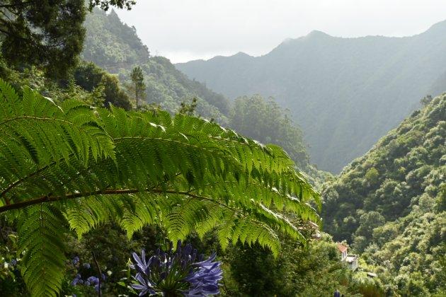 Madeira is groen!