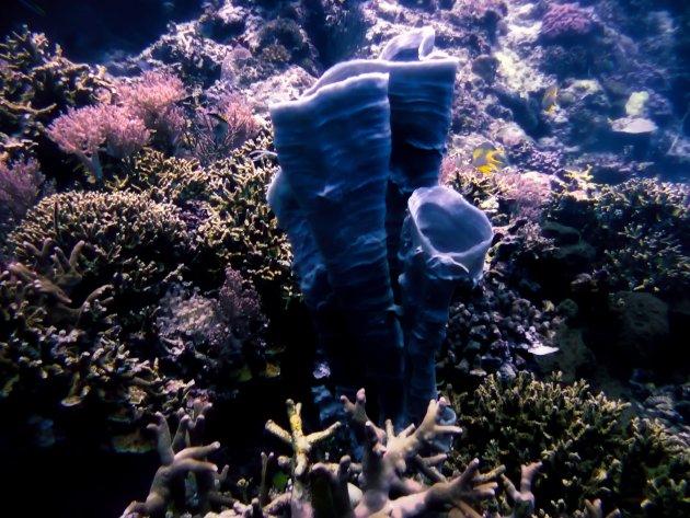sponzen en koralen