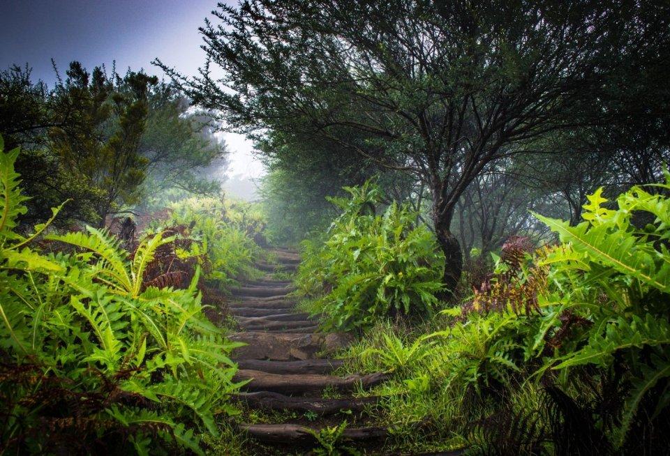 Wandeltochten - La Gomera Spanje - Getty Images