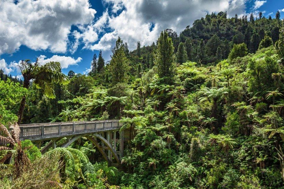 Wandeltochten - The Bridge to Nowhere in Nationaal Park Whanganui in Nieuw-Zeeland - Getty Images