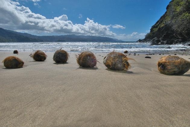 aangespoelde kokosnoten op hiva oa