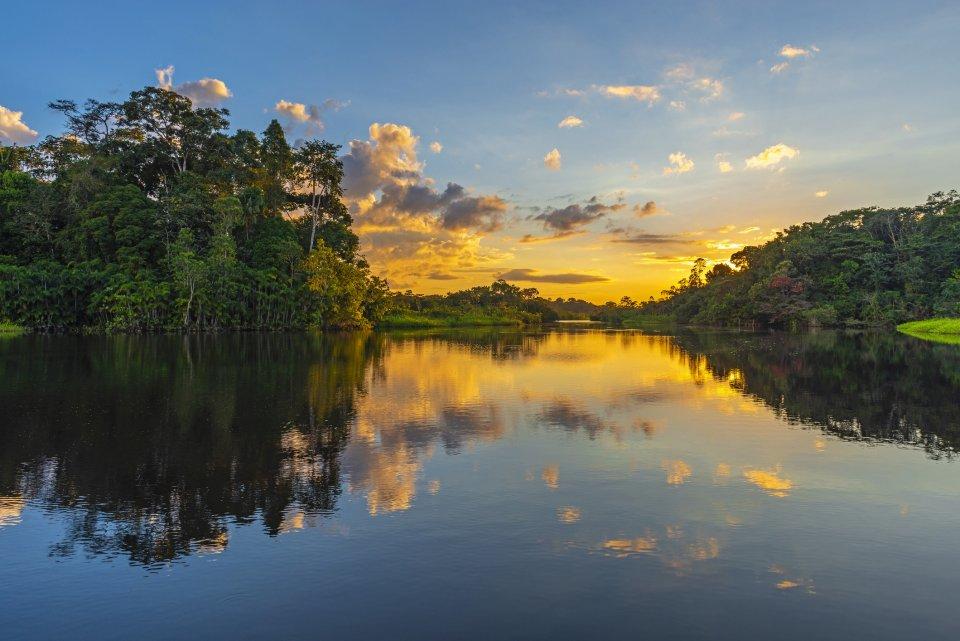 Wandeltochten - Jungle in Suriname - CREDIT iStock