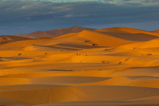 De lege woestijn.