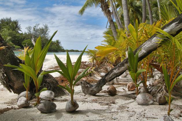 eilandje in lagune bora bora