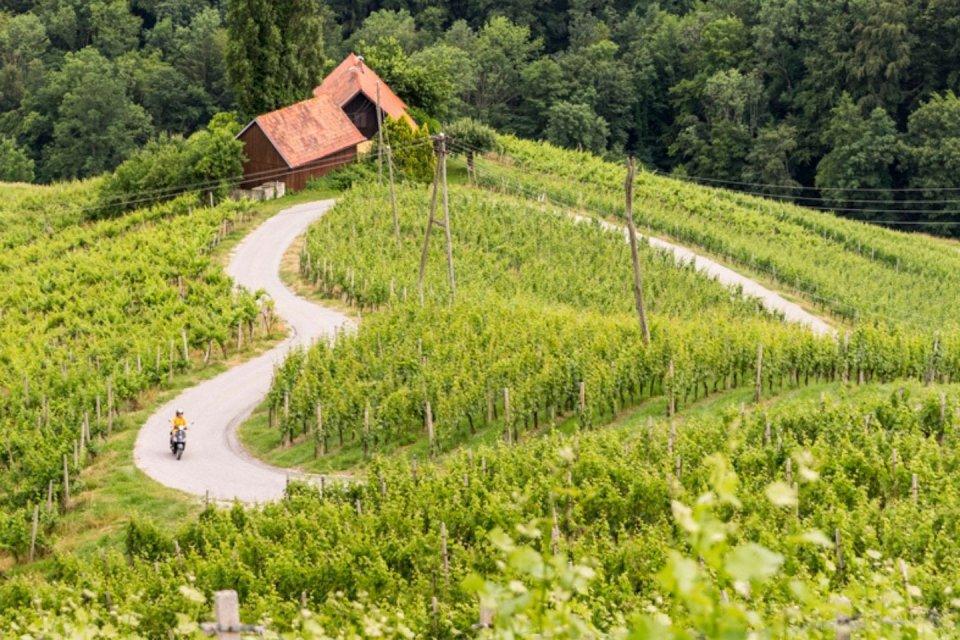 Graz - wijnvelden CREDIT Margriet Hoekstra
