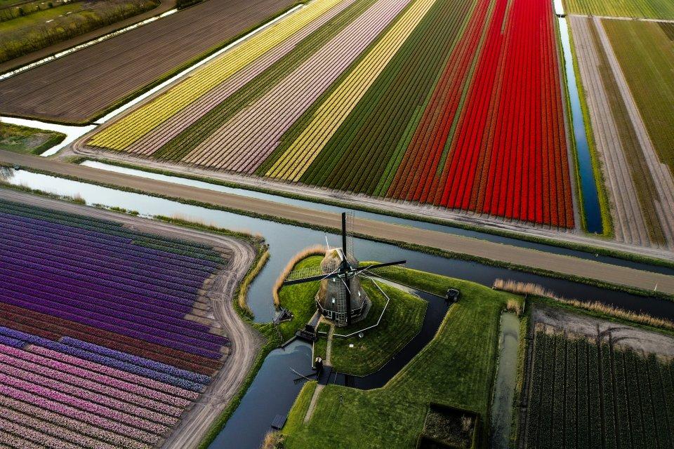 Tulpenvelden door David Schurink