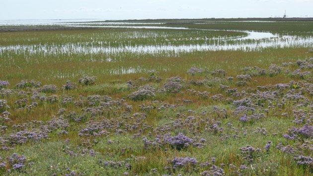 Kroon's polder, Vlieland