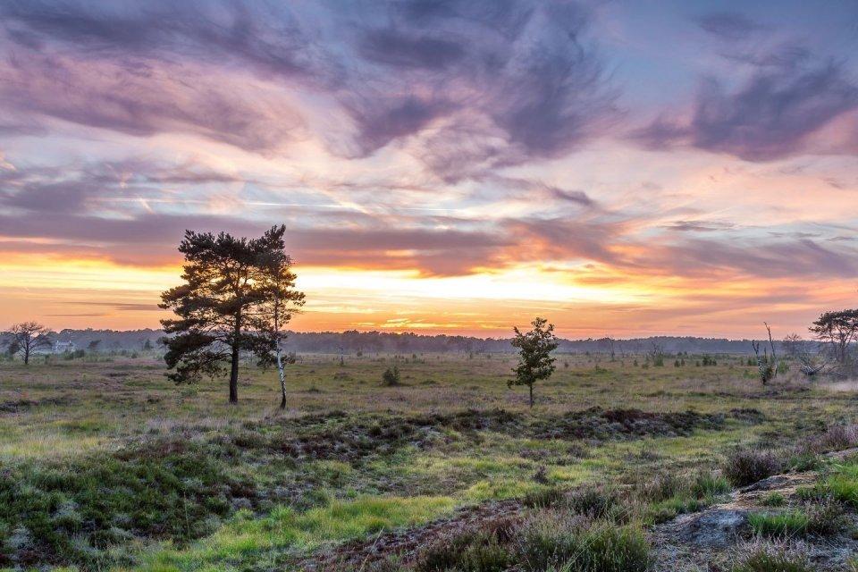 Grenspark Kalmthoutse Heide CREDIT Getty Images