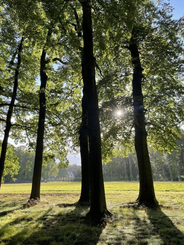 Bomen in het Paleis park.