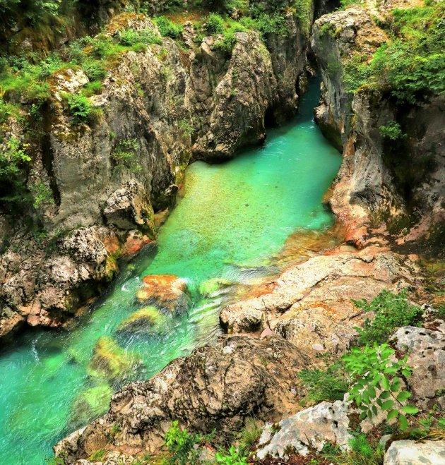 Groen paradijsje
