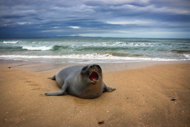 Het verhaal van de Zeehond
