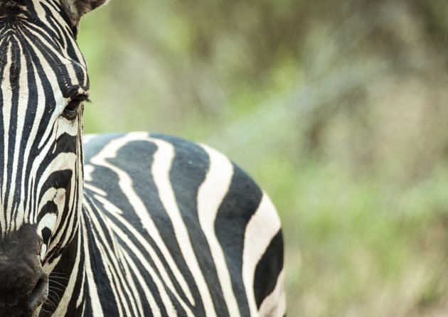 Zuid afrikaanse strepen