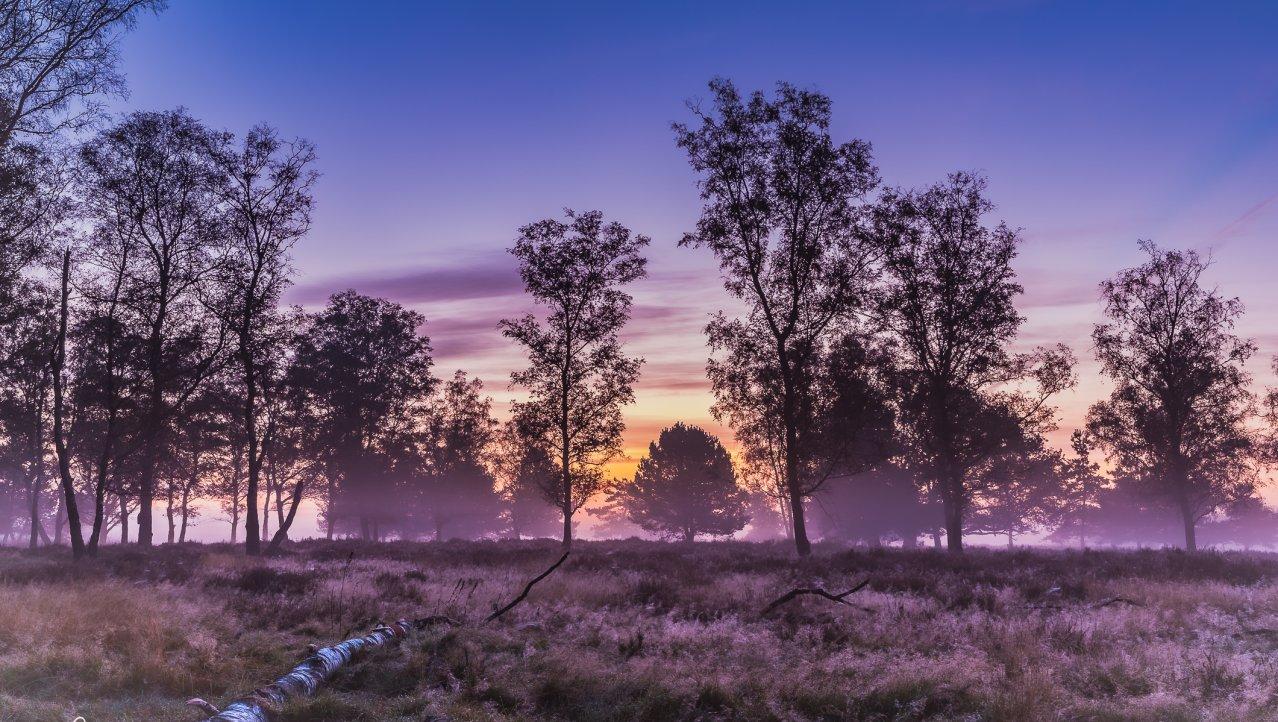 Deelerwoud in the early Morning