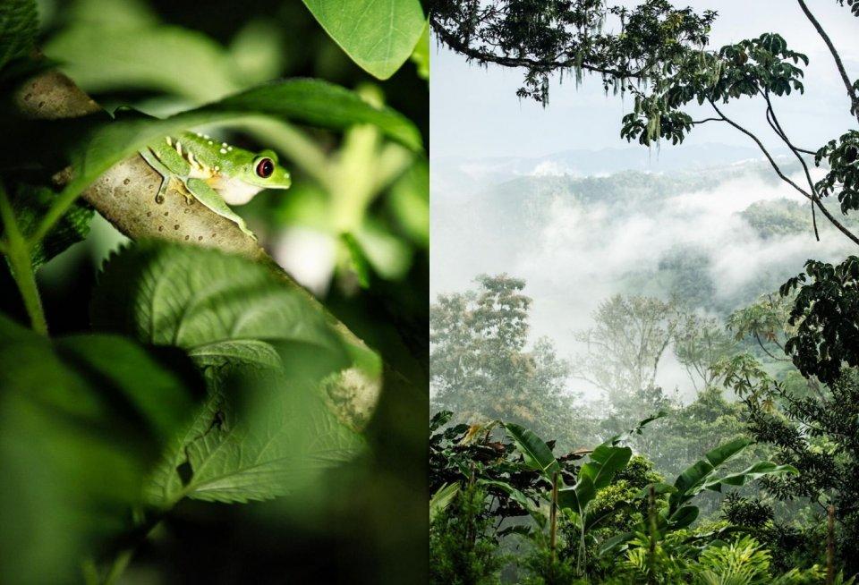 Natuurschoon langs de nieuwe wandelroute Camino de Costa Rica. Foto: Malou van Breevoort