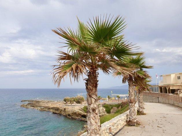 Palmbomen op de boulevard.