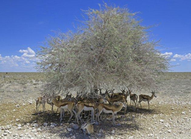 Namib-Naukluft woestijn Namibië