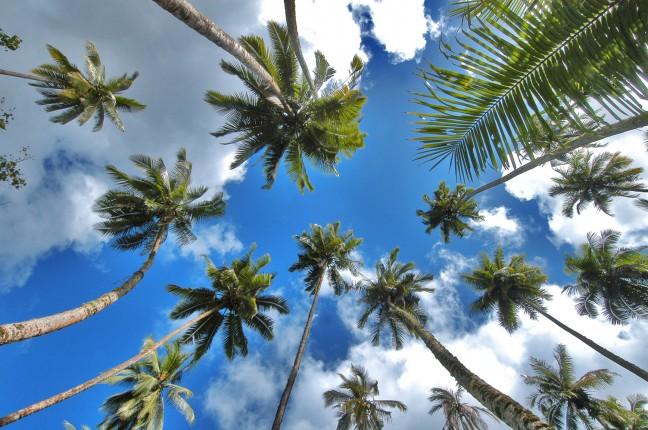 palmbomen op hiva oa