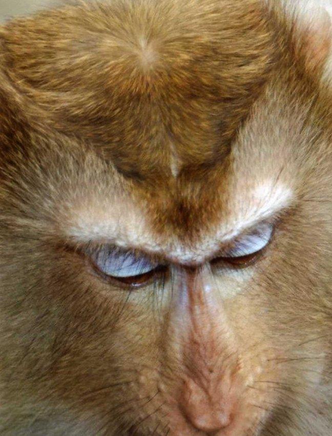zoo verlegen