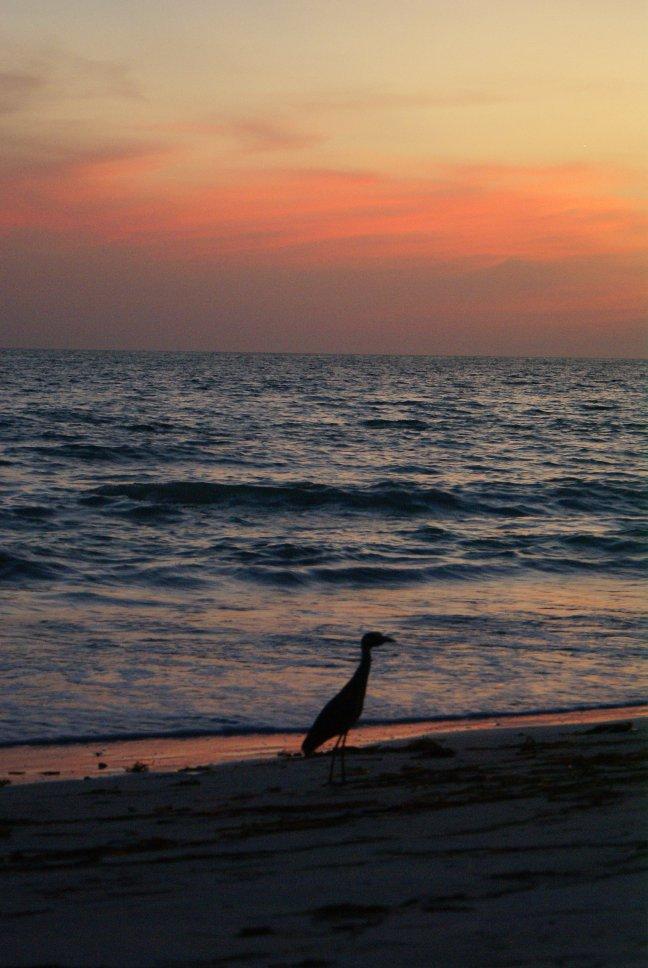 vogel bij zonsondergang