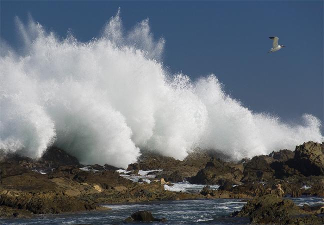 Seagull at waves