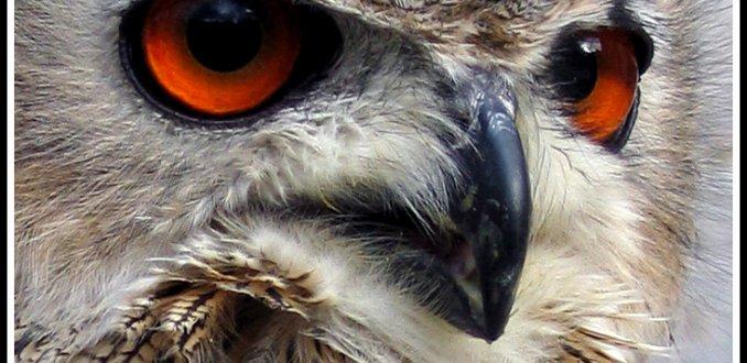 oranje ogen