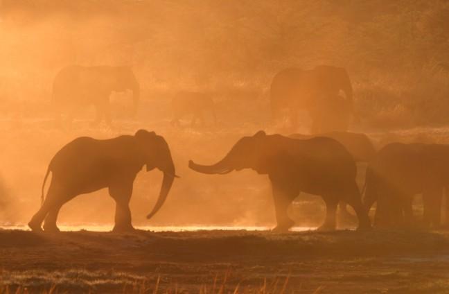 Olifanten bij zonsopkomst