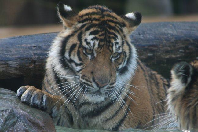 speeluurtje in Australia Zoo
