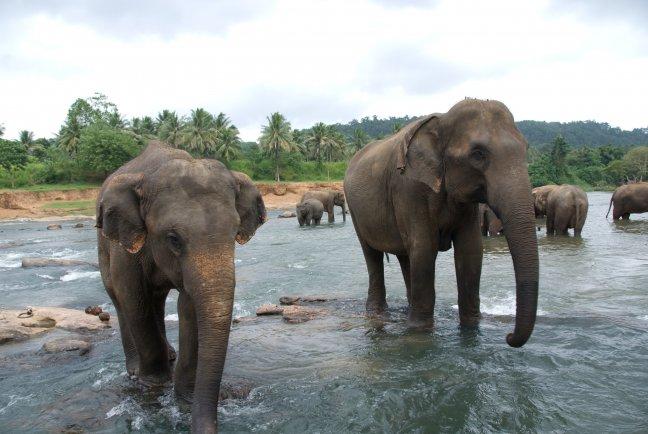 Olifanten aan het baden in de rivier